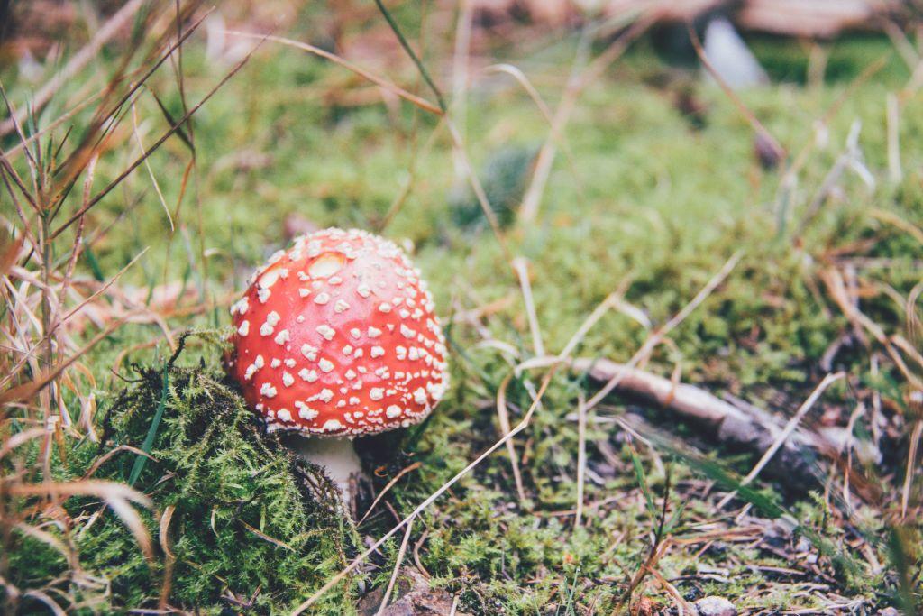 Schwarzwald Wochenende Tipps und Erfahrungen