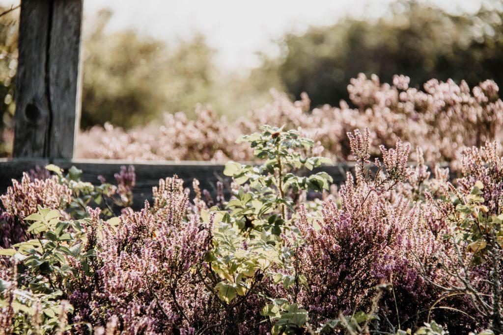 Skane Schweden Tipps Heide