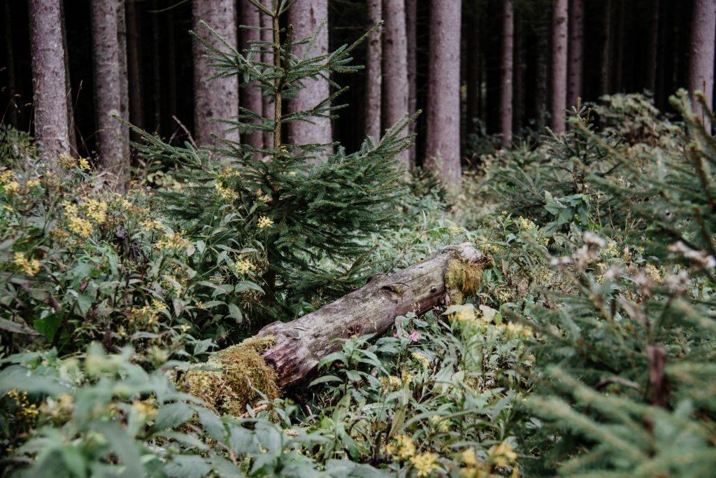 Urlaub 2020 Schwarzwald